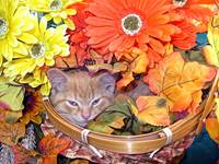 Serene Drowsy Kitty Cat Kitten Hiding,Fall Colours