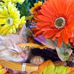 """Tabby Kitty Cat Kitten Dreaming,Fall Flower Basket"" by Chantal"