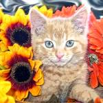 """Cute Sunflower Kitty Cat Kitten,Blue Eyes,Portrait"" by Chantal"