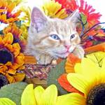 """Cute Peaceful Drowsy Kitty Cat Kitten,Head on Paws"" by Chantal"