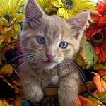 """Goofy Kitty Cat Kitten Expression,Head Tilted Side"" by Chantal"
