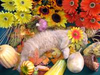 Kitty Cat Kitten Sleeping, Fall Vegetables, Gourds