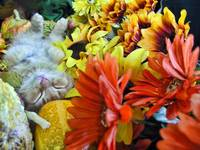 Kitty Cat Kitten Sleeping, Back,Harvest Still Life