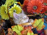 Kitty Cat Kitten Catnapping,Head Up,Flower Basket