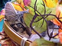 Kitty Cat Kitten Hiding,peeking out,Flower Basket