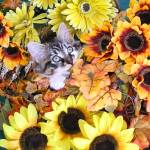 """Kitty Cat Kitten Eating Plant,Autumn Flower Basket"" by Chantal"