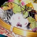 """Kitty Cat Kitten Hiding,Paw Up, Fall Leaves Basket"" by Chantal"