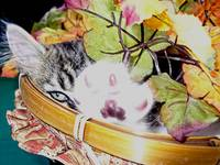 Kitty Cat Kitten Hiding,Paw Up, Fall Leaves Basket
