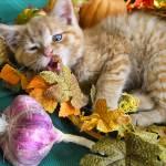 """""""Om Nom Nom,""""Retarded"""" Cheezburger Kitty Cat Kitten"""" by Chantal"""
