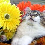 """Kitty Cat Kitten Looking Up, Lounging,Fall Flowers"" by Chantal"