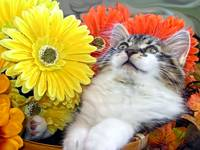 Kitty Cat Kitten Looking Up, Lounging,Fall Flowers