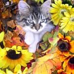 """""""Cute Kitty Cat Kitten, Paws Crossed, Flower Basket"""" by Chantal"""