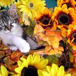 """Cute Kitty Cat Kitten, Paws Crossed, Flower Basket"" by Chantal"