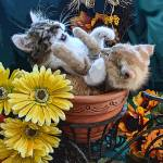 """Two Kitty Cat Kittens Playing,Fall Autumn Flowers"" by Chantal"