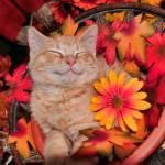 """Happy Cheshire Cat,Kitty Kitten Smiling,Portrait"" by Chantal"