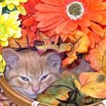"""""""Drowsy Kitty Cat Kitten, Flower Basket,Fall Colors"""" by Chantal"""