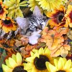 """Kitty Cat Kitten Chewing Fall Leaves,Flower Basket"" by Chantal"