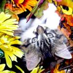 """Kitty Cat Kitten Upside Down, Fall Autumn Colors"" by Chantal"
