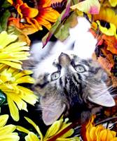 Kitty Cat Kitten Upside Down, Fall Autumn Colors
