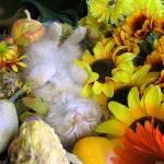 """""""Kitty Cat Kitten Sleeping, Fall Autumn Harvest"""" by Chantal"""