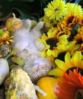 Kitty Cat Kitten Sleeping, Fall Autumn Harvest