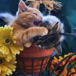 """Psycho Cat - Angry Kitten biting Kitty, Flower Pot"" by Chantal"