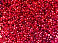 Christmas Cranberry Fruit, Plentiful Bounty, Food