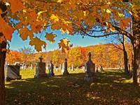 Fall Autumn Scene,Yellow Leaf Tree,Cemetery,Framed