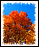 Orange Leaf Tree,Peak Fall Autumn Color,Framed Art