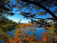 Nature, Fall Autumn Season, Pine Branch, Blue Lake
