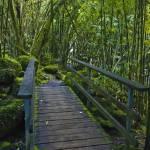 """Tahiti Jungle"" by natesmart"