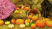Fall Colors,Thanksgiving Pumpkin Patch,Pink Mums