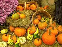 Pumpkin Display,Wooden Bushels,Pink Chrysanthemums