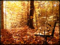 Mystical Forest Bench,Sunlight,Fall Autumn Colors