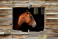 Horse Portrait (Framed)
