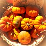"""Miniature Pumpkins,Wicker Basket,Fall Autumn Theme"" by Chantal"