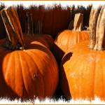 """Pumpkin Patch,Large Gourds,Autumn Harvest Colors"" by Chantal"