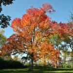 """""""Fiery Fall"""" by julieandel"""