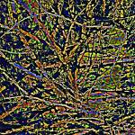 """Abstract Branches     0800"" by BarbaraLin"