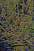 Abstract Branches     0800