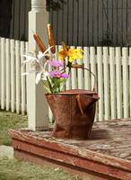 Rusted Water Bucket and Flowers