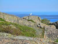 Gull on Cadillac Mountain