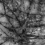 """Abstract Branches  0800-11 Black and White Edition"" by BarbaraLin"