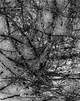 Abstract Branches  0800-11 Black and White Edition