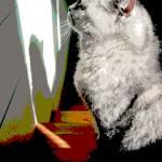 """Stretch Sideways - Kitty Cat Profile Photograph"" by RebeccaKorpita"