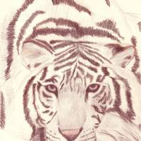 White Tiger Art Prints & Posters by Allison Hatch