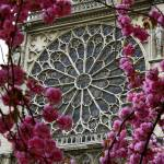 """Notre Dame Rose Window"" by KlementGallery"