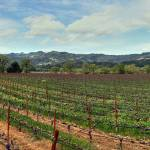 """NV Vineyard Pan"" by KlementGallery"