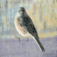 Dark-eyed Junco 13x13