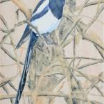 """Black-billed Magpie 15x23"" by Coloradographicalchemy"